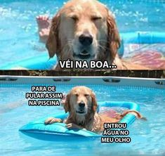 O cão na piscina