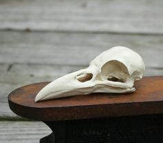 crow skull replica by skullery on Etsy, $19.50