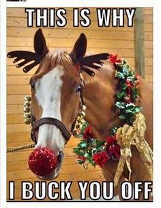 Funny Animal Pictures Of The Day - 24 Pics (Christmas Funny Animals)