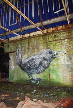 ROA_street-artist