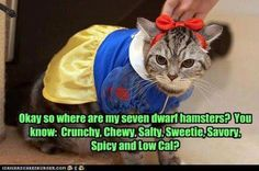 Nowhite-cat is still waiting for the seven dwarf hamsters, you know their names: Crunchy, Chewy, Salty, Sweetie, Savery, Spicy and Low Cal... xD