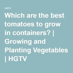 Which are the best tomatoes to grow in containers?   Growing and Planting Vegetables   HGTV