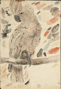 Salmon-crested cockatoo -- graphite and watercolor drawing (25) by peacay, via Flickr