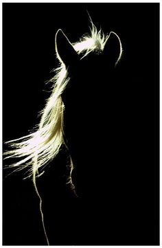Come here whispered my heart 💛 Pretty Horses, Horse Love, Beautiful Horses, Animals Beautiful, Horse Photos, Horse Pictures, Shadow Pictures, Equine Photography, Animal Photography