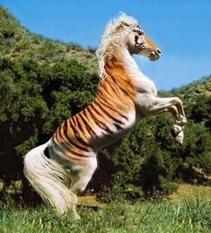 cavalos mais raros do mundo ile ilgili görsel sonucu