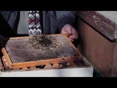 red de bijen greenpeace