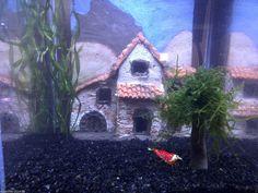 Rückwand aus Ton Nano 3D Stadt unter Wasser Mehrfarbig Aquarium Natürlich/Echt | eBay