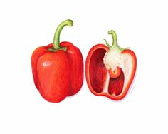 Red Bell Pepper Art // Food Illustration // Art Print, Realistic, Spicy, Kitchen, Garden