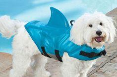 Cão com colete salva-vidas... Porque a chuva não pára e os nossos cães precisam de ir á rua sem se afogarem.....