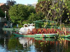 Swan boats in the public garden!