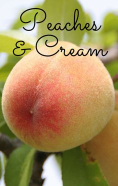 Richard Blais demonstrated how you can use dry ice to make your own unbelievably delicious batch of Peaches and Cream. Get the recipe, as seen on The Talk. http://www.foodus.com/the-talk-richard-blais-peaches-and-cream-recipe/