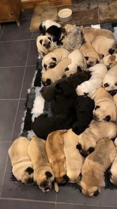 Grumble Of Pugs, Pug Gifs, Pug Love, Mountain Dogs, Cute Funny Animals, Pet Birds, Animals Beautiful, Fur Babies, Dog Lovers