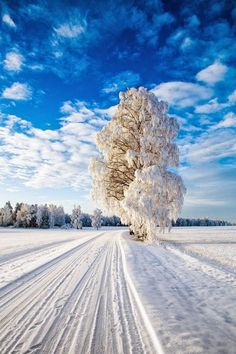 ✦ Winter wonderland in Norway. ✦ Photo credits: foto ✦ Tag to be featured. Winter Szenen, Winter Magic, Winter Road, Winter Fairy, Winter Travel, Winter Time, Winter Photography, Landscape Photography, Nature Photography