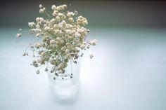 滿天星 | by Bobi-home