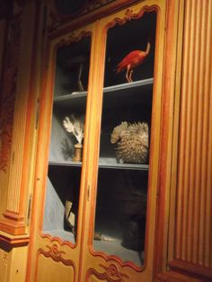 musée histoire naturelle la rochelle