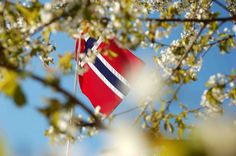 How to like a Norwegian of May what? of May is the National Day of Norway and celebrates the day Norway got its own constitution, in It is a day where Norwegians . Norway National Day, May Celebrations, Constitution Day, Special Day, Party Planning, Scandinavian, Champagne, Brunch, Celebrities