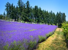 Vancouver Island's Cowichan Valley has been pegged the new Provence!