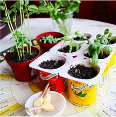 plant unit, elementary school. reuse yogurt containers