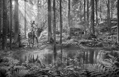 A project shot for promoting Finland as a travel/holiday destination.Post production by Saddington & Baynes. Pictures Of The Week, Black N White, Holiday Destinations, Holiday Travel, Animal Photography, Finland, Moose Art, Beautiful Pictures, Landscape