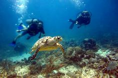 Diving Certification Courses:  Wet Set: a scuba-diving shop found in the village of Puerto Morelos