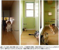 vivienda adaptada para gatos