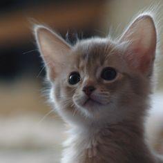 full attention #kittens
