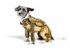 Купите собаке скафандр