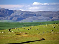 This photo from Western Cape, West is titled 'Big sky country'. South Afrika, Big Sky Country, My Land, African Art, Cape Town, Cry, Cycling, Beautiful Places, Landscapes