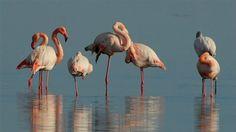 [In]: Γιατί τα φλαμίνγκο στέκονται και κοιμούνται στο ένα πόδι   http://www.multi-news.gr/in-giati-flamingo-stekonte-kimounte-sto-ena-podi/?utm_source=PN&utm_medium=multi-news.gr&utm_campaign=Socializr-multi-news