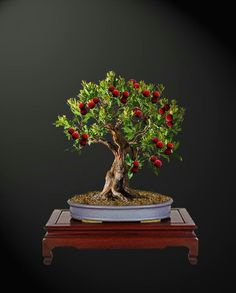 Linchpin By Seth Godin And Generate By Daniel Pink - Two Guides, One Particular Information Lychee Tree Bonsai. Bonsai Fruit Tree, Bonsai Plants, Bonsai Garden, Fruit Trees, Trees To Plant, Mini Bonsai, Rare Flowers, Amazing Flowers, Pretty Flowers
