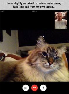 I was slightly surprised to receive an incoming FaceTime call from my own laptop / living with cats