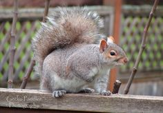 I had to include this fellow as he provides clean up service around the bottom of the feeders.