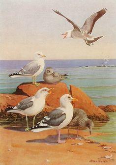 1930s, Seagulls, Bird Print