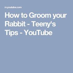 How to Groom your Rabbit - Teeny's Tips - YouTube