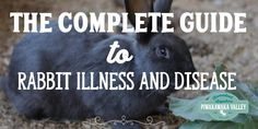Healthy strong stock will avoid most rabbit diseases. This is a complete guide to common rabbit illness and treatment of diseases for when disaster strikes.