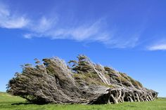 Windswept trees at Slope Point | Flickr - Photo Sharing!