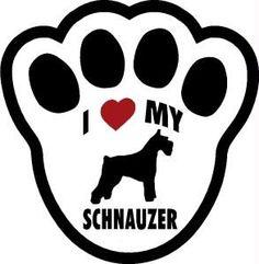 I love my Schnauzer!
