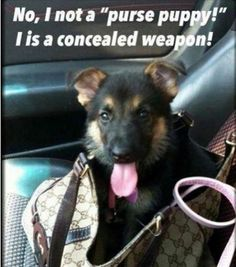 Wicked Training Your German Shepherd Dog Ideas. Mind Blowing Training Your German Shepherd Dog Ideas. Funny Animal Memes, Dog Memes, Cute Funny Animals, Funny Animal Pictures, Funny Dogs, Funny Memes, Dog Pictures, Hilarious, True Memes