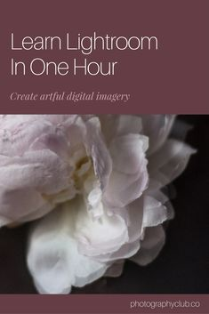 Learn Lightroom in One Hour - Creative Biz Academy - renukostyle.com