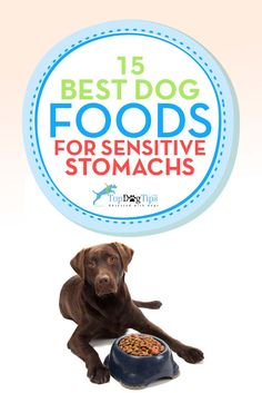 1000 Images About Best Dog Food For On Pinterest