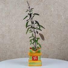 Tulasi Plant, Beauty Tips, Beauty Hacks, Telugu, Health, Plants, Beauty Tricks, Health Care, Plant