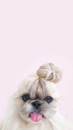 Dog with Bun iPhone Wallpaper