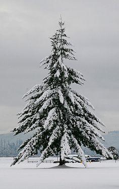 Laden Tree in Winter. Behold the Griswald family tree! All Nature, Nature Tree, Winter Trees, Winter Snow, Winter Socks, Cozy Winter, Hirsch Illustration, Winter Schnee, I Love Winter
