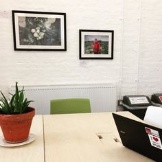 A series of my images are now being exhibited on the ground floor of Impact Hub Islington - my first exhibition in years and the first time I've exhibited my food waste images! Featuring staff and volunteers from @foodcyclehq @feedbackorg (the Gleaning Network The Pig Idea and Disco Soup) and FareShare. Thank you to @impacthubislington for their constant support and generosity!