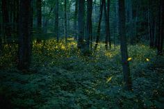 TENNESSEE: For two weeks every summer, a special species of fireflies gathers in Great Smoky Mountains National Park for mating season. The fireflies blink in unison.  Source:National Parks Traveler (Photo by Floris Van Breugel via Getty Images)  via @AOL_Lifestyle Read more: https://www.aol.com/article/lifestyle/2017/06/14/the-most-breathtaking-natural-wonder-in-every-state/22140332/?a_dgi=aolshare_pinterest#fullscreen