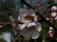 spring :3
