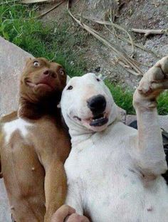 Silly dog selfie looks like Spuds Makenzie and friend lol