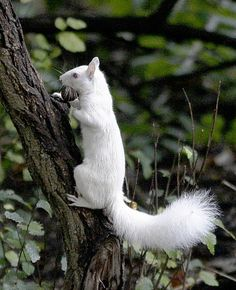 White Squirrel by Al Behrman...I seen one myself a few years back, everyone thought I was crazy!  Now here's proof!