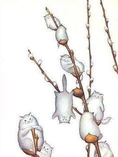 Wawww pussy willows!