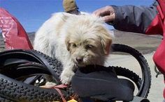 Give a dog a bone and he'll run 1,000 miles  When a team of Chinese cyclists on a 1,000 mile-long expedition from Chengdu to Tibet threw a stray dog a bone, they may not have thought they would attract a companion who would run with them for the entire length of their journey.